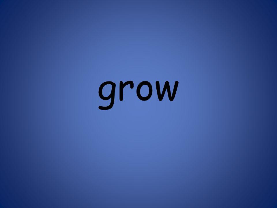 grow 125