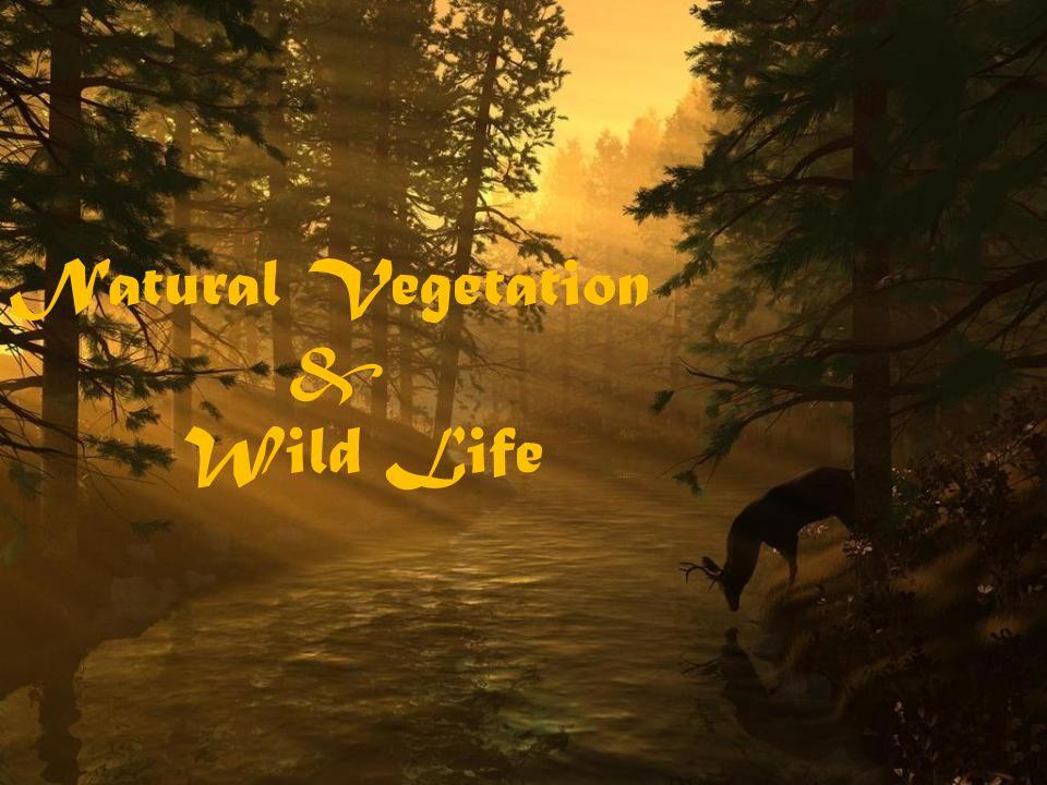 define natural vegetation and wildlife