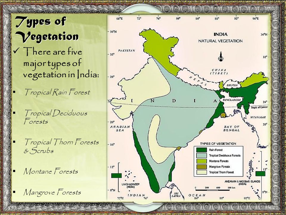 natural vegetation in india The natural vegetation associated with these regions is an exceedingly varied, broadleaf, evergreen rain forest, typically tall and dense much of the rain forest, however, is in hilly regions that have been repeatedly burned over and cleared for slash-and-burn agriculture, a type of farming particularly associated with india's tribal population.
