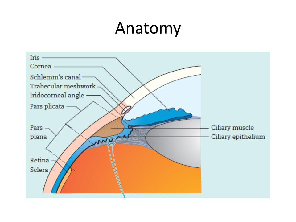Groartig Pars Plana Anatomie Ideen Menschliche Anatomie Bilder