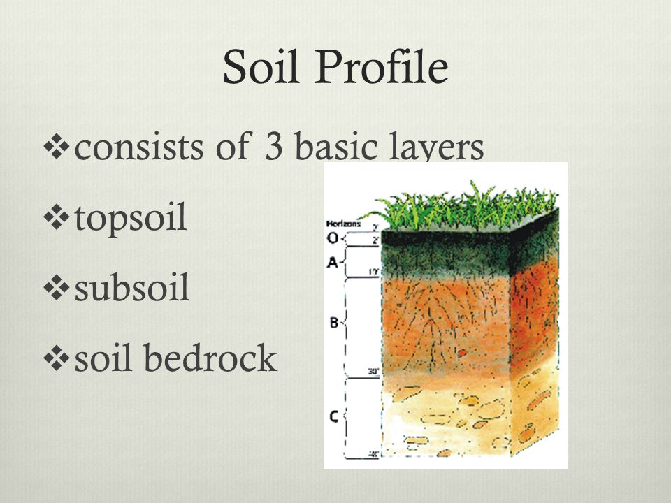 Plant and soil science standard 4 objective 2 ppt download for Soil zone of accumulation