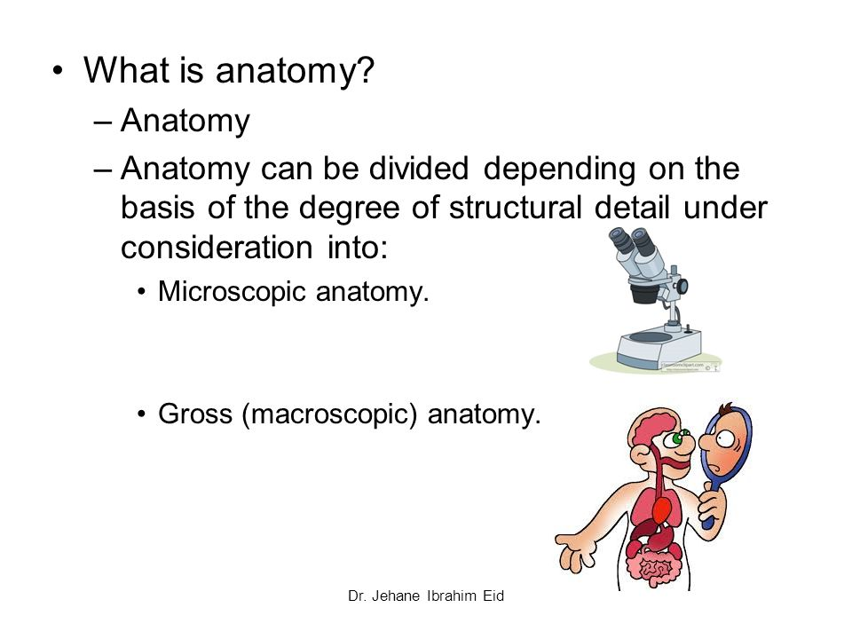 What is anatomy in biology