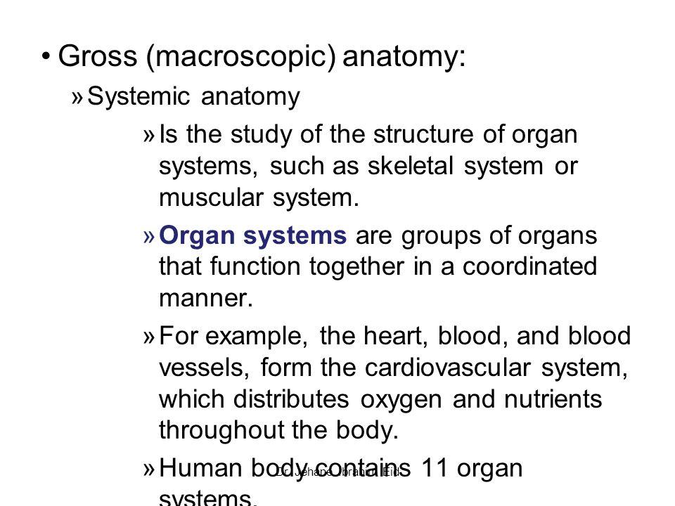 Example of gross anatomy