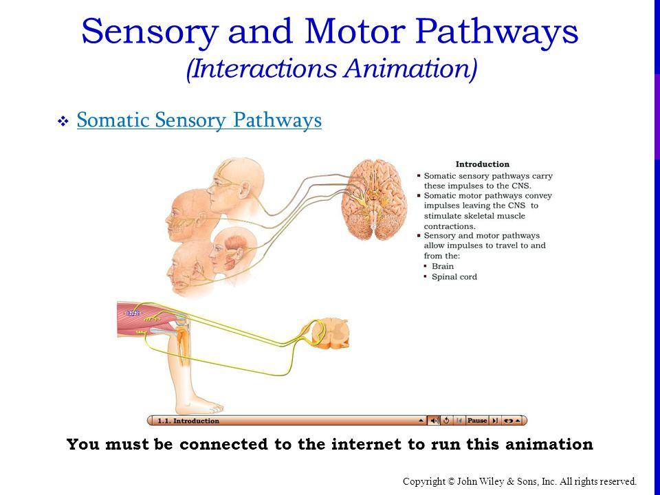 sensory motor and integrative systems A sensory system is a part of the nervous system responsible for processing sensory information a sensory system  sensory systems are  speeds up motor.