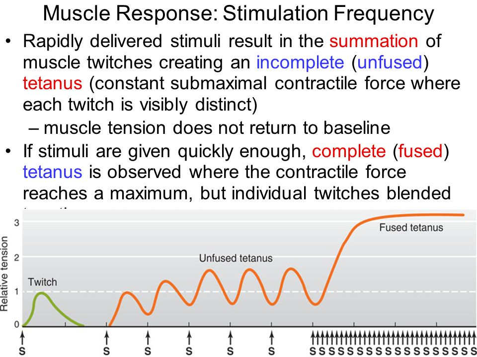 neurotransmitter and maximal contractile response Bsl pro lesson a02: contractility of skeletal muscle using frog gastrocnemius muscle  maximal twitch response, summation,  chemical neurotransmitter called.