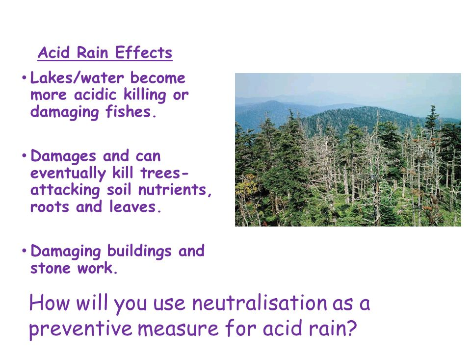 the damaging effects of acid rain Effects of acid rainacid rain causes acidification of lakes and streams and contributes to damage of trees at high elevations (for example, red spruce trees above .