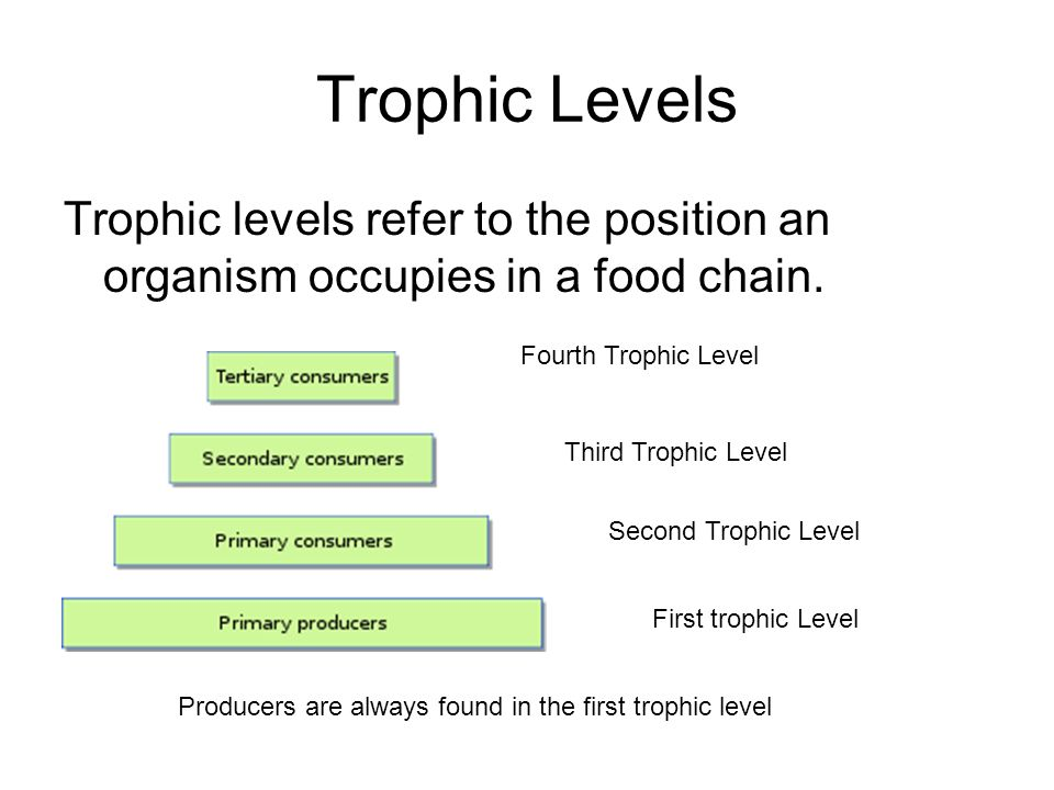 Organism In The Highest Trophic Level Of A Food Chain