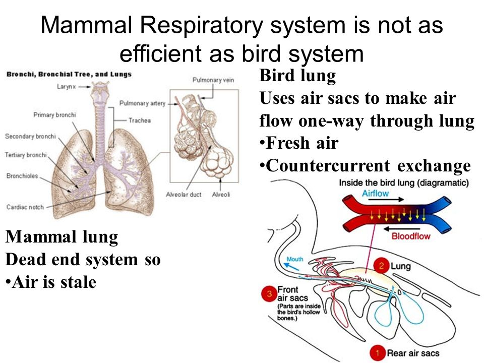 respiratory system in relation to energy Nutritional status affects all components of the respiratory system, including central hypoxic and hypercapnic drives, respiratory muscles, and lung tissues (parenchyma) the amount and composition of energy intake affect the metabolic rate, o 2 consumption, and co 2 production.