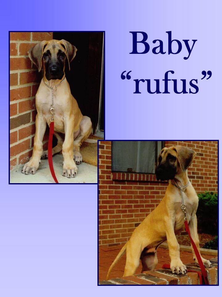 Baby rufus
