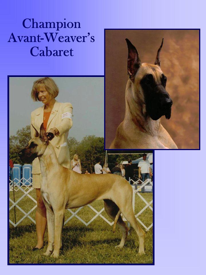 Champion Avant-Weaver's Cabaret