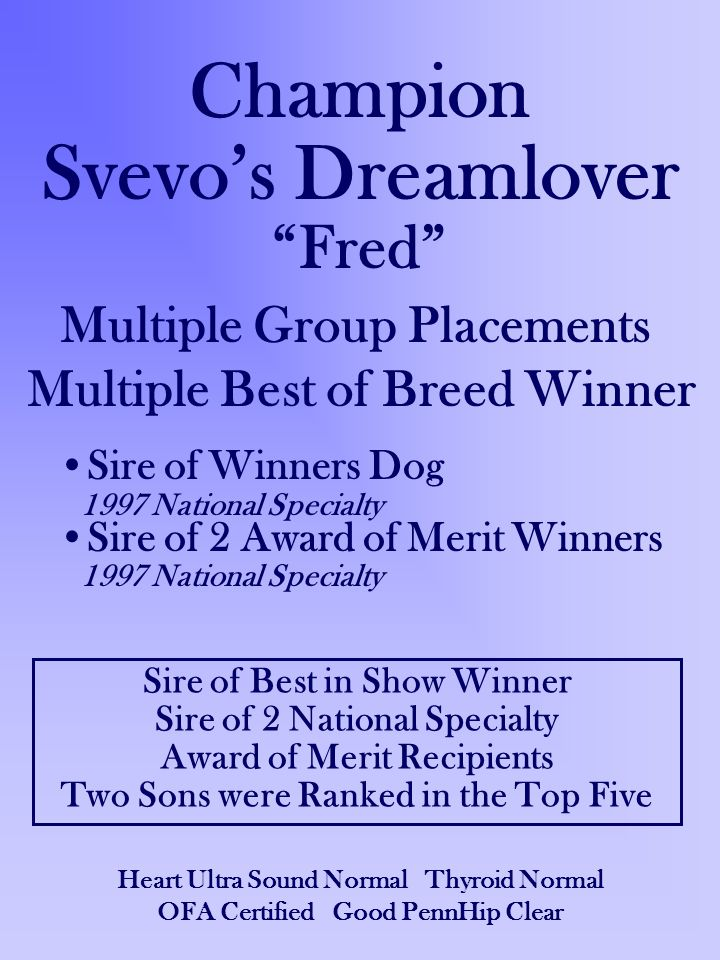 Champion Svevo's Dreamlover