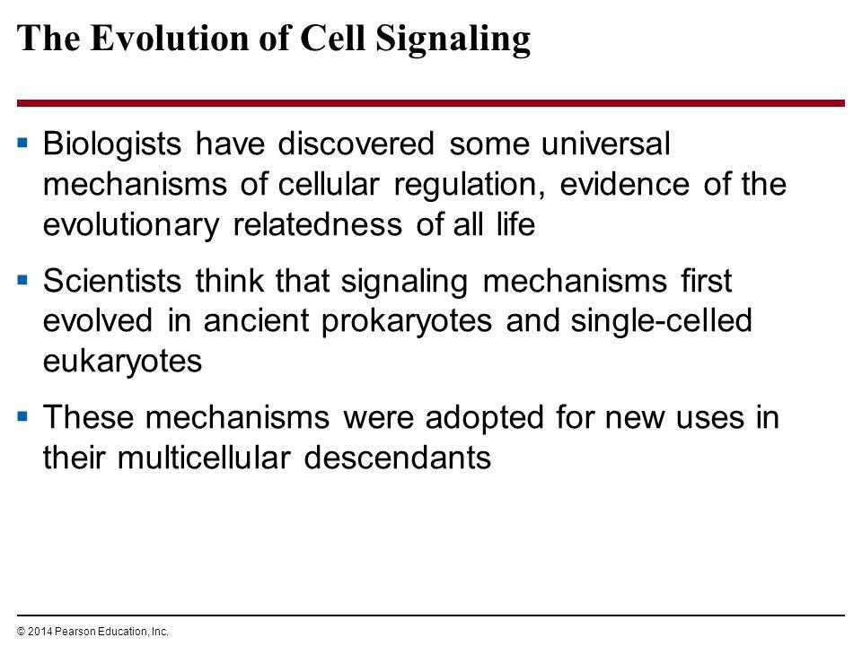 Evidence of evolution worksheet pearson education
