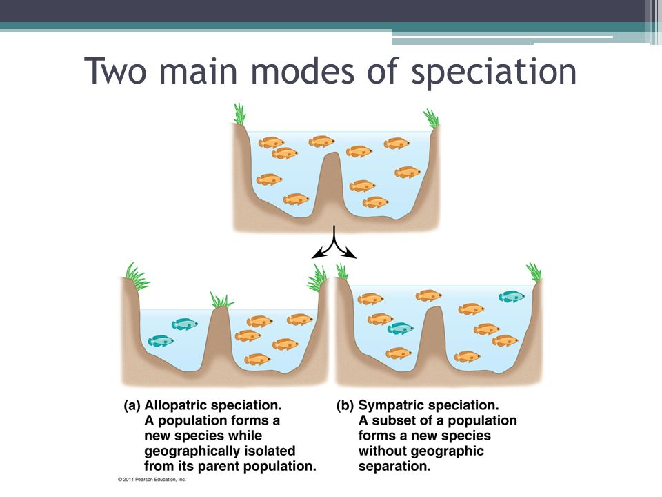 Natural Selection And Speciation Ppt