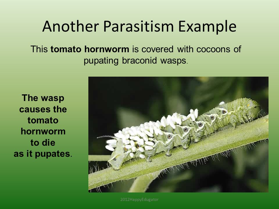 what is an example of a parasitism relationship