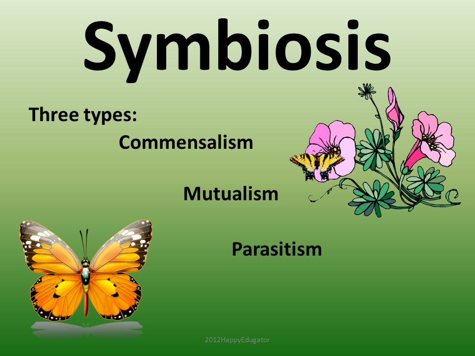 Symbiosis Three types: Commensalism Mutualism Parasitism