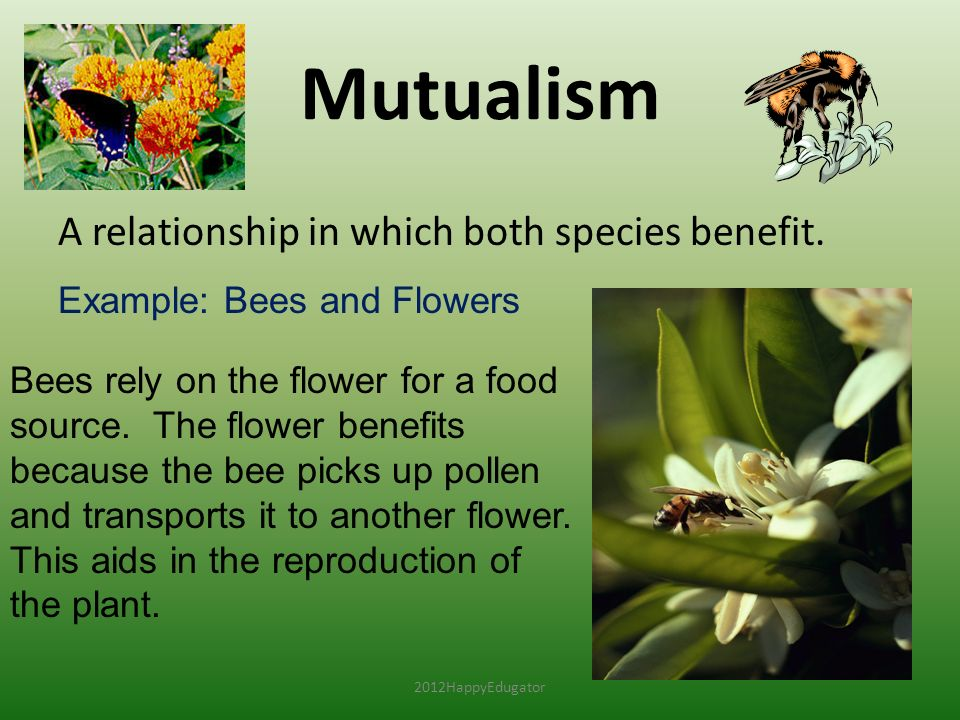 Mutualism A relationship in which both species benefit.