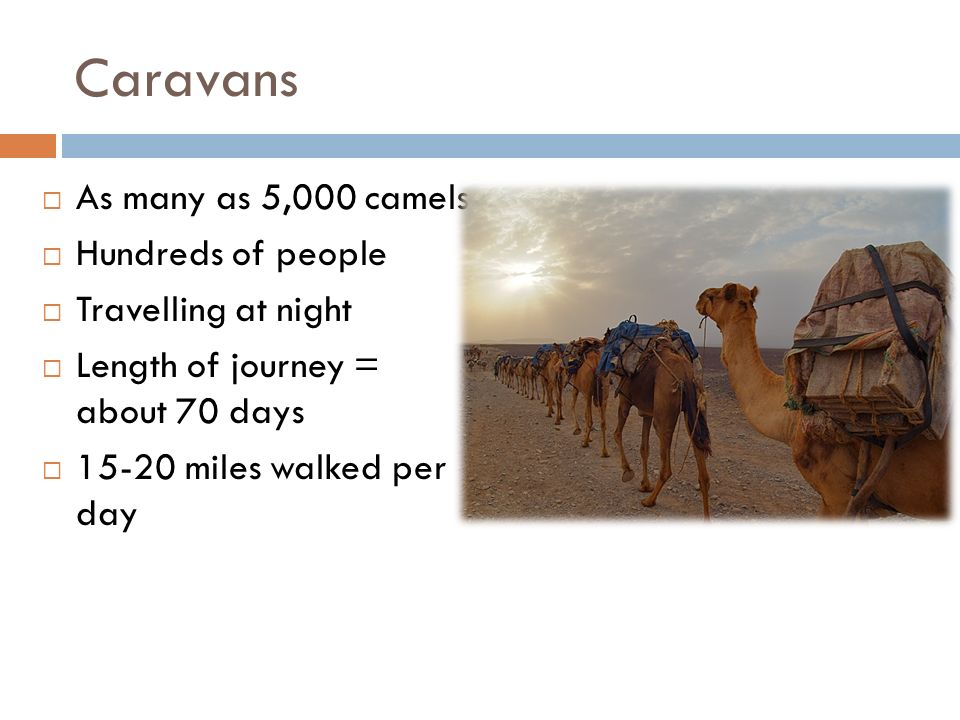 Caravans As many as 5,000 camels Hundreds of people