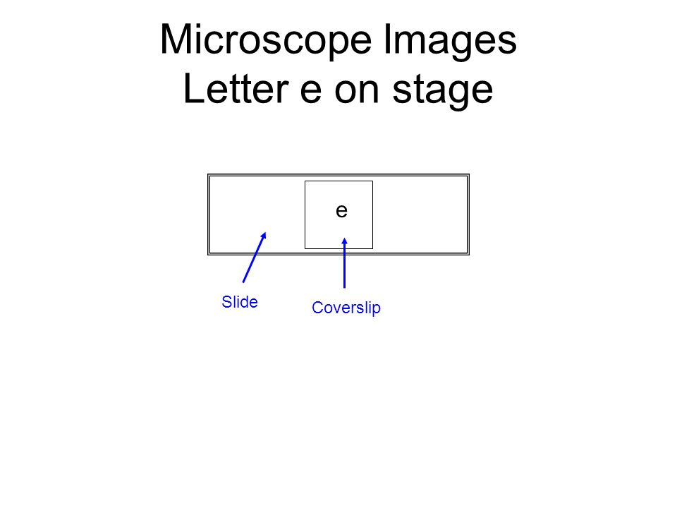 Introduction To The Microscope Ppt Video Online Download