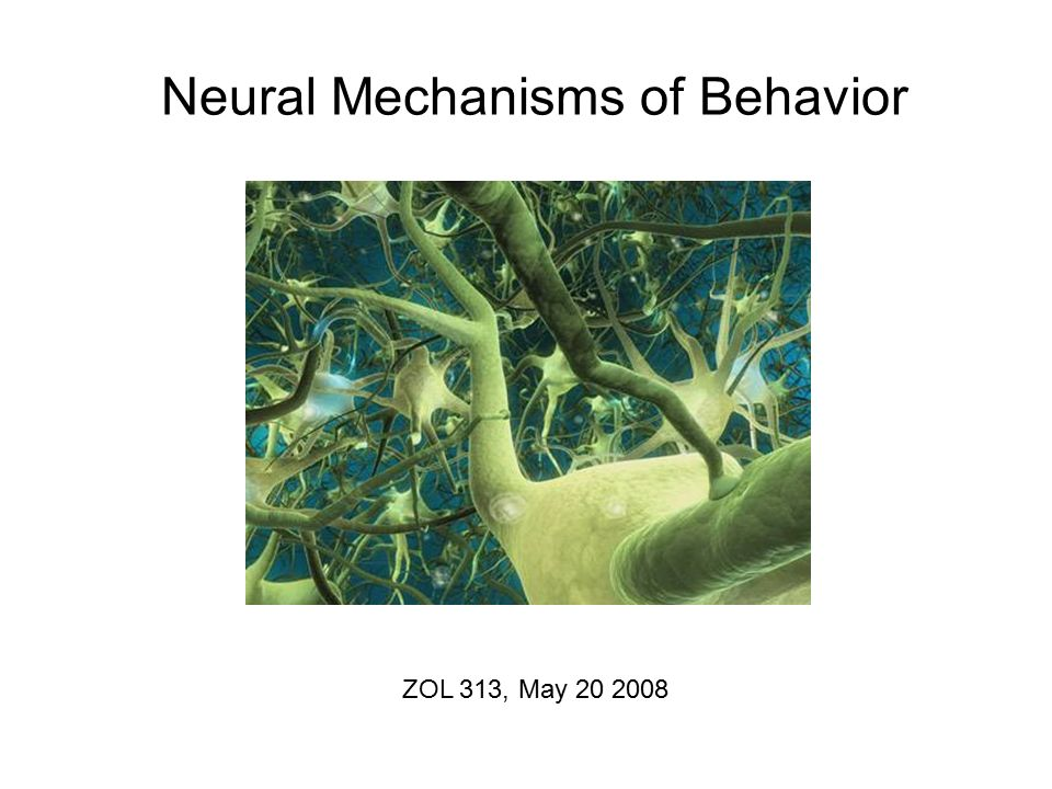 neural mechanisms controlling eating behaviors Models that have face validity for human eating and to define these behaviors more precisely for example, tests of food intake behavior are often conducted in.