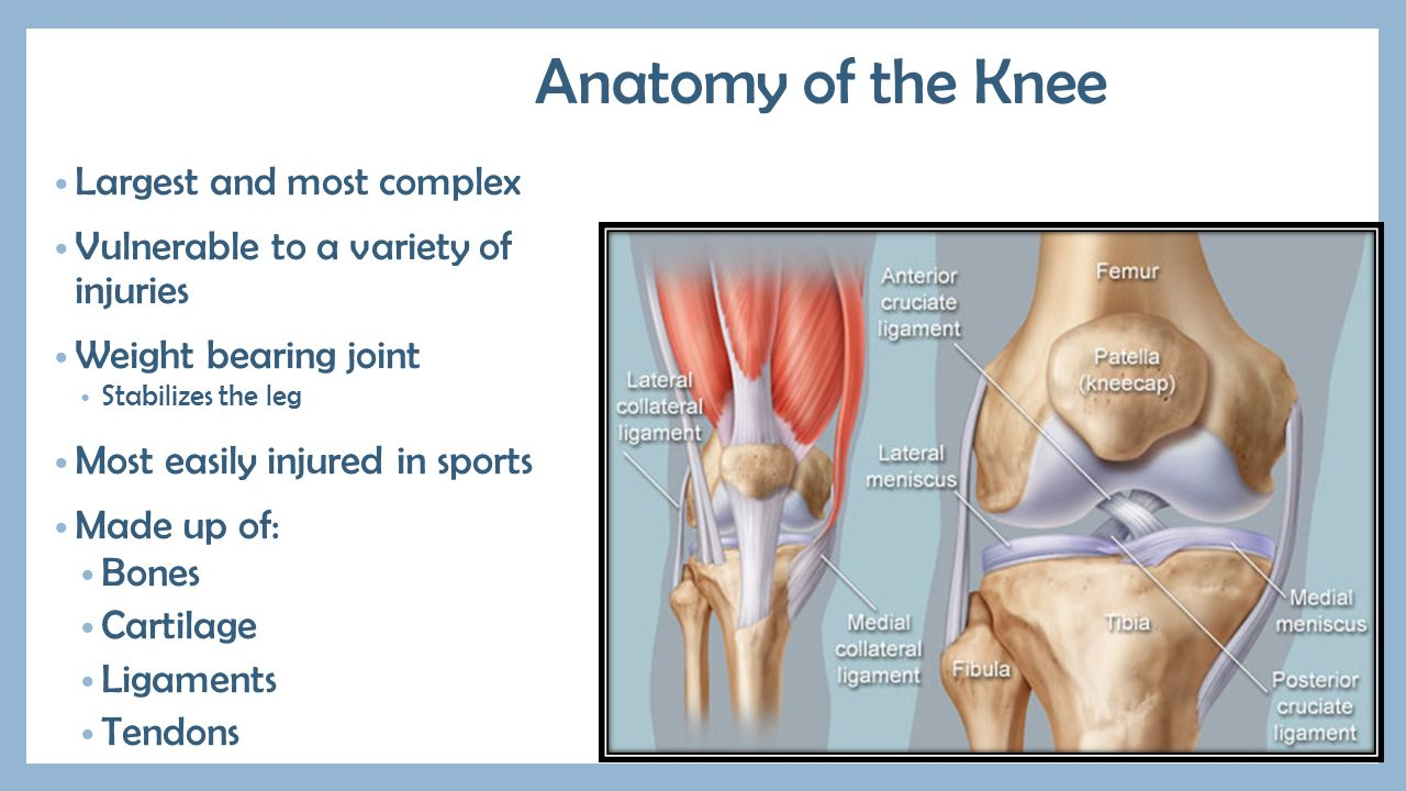Anatomy of knee