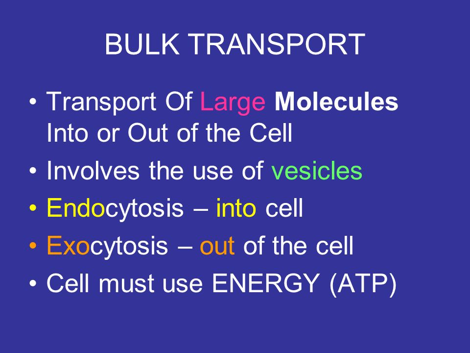 BULK TRANSPORT Transport Of Large Molecules Into or Out of the Cell