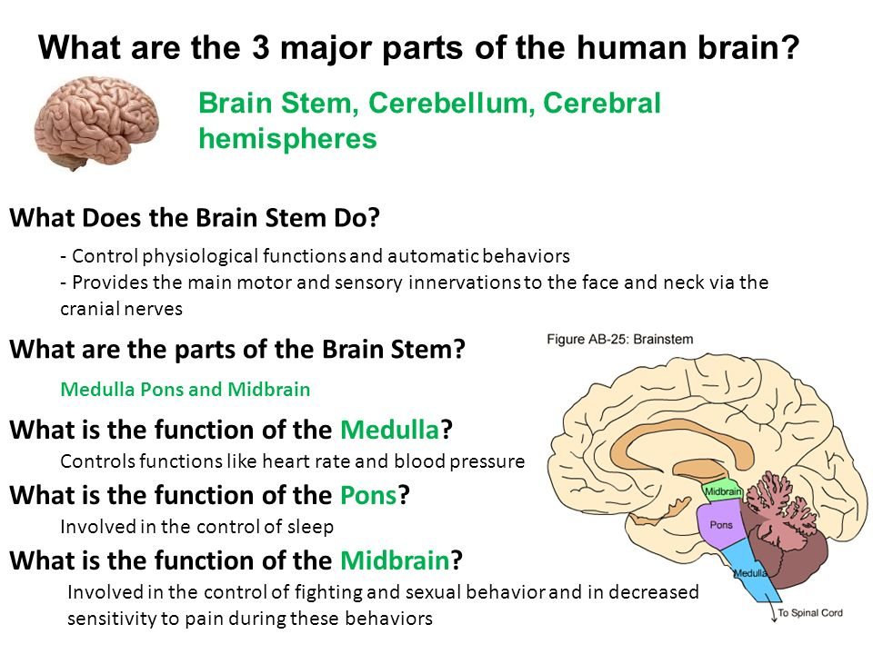 Parts Of The Brain And What They Do Psyc 001 Week ppt vide...