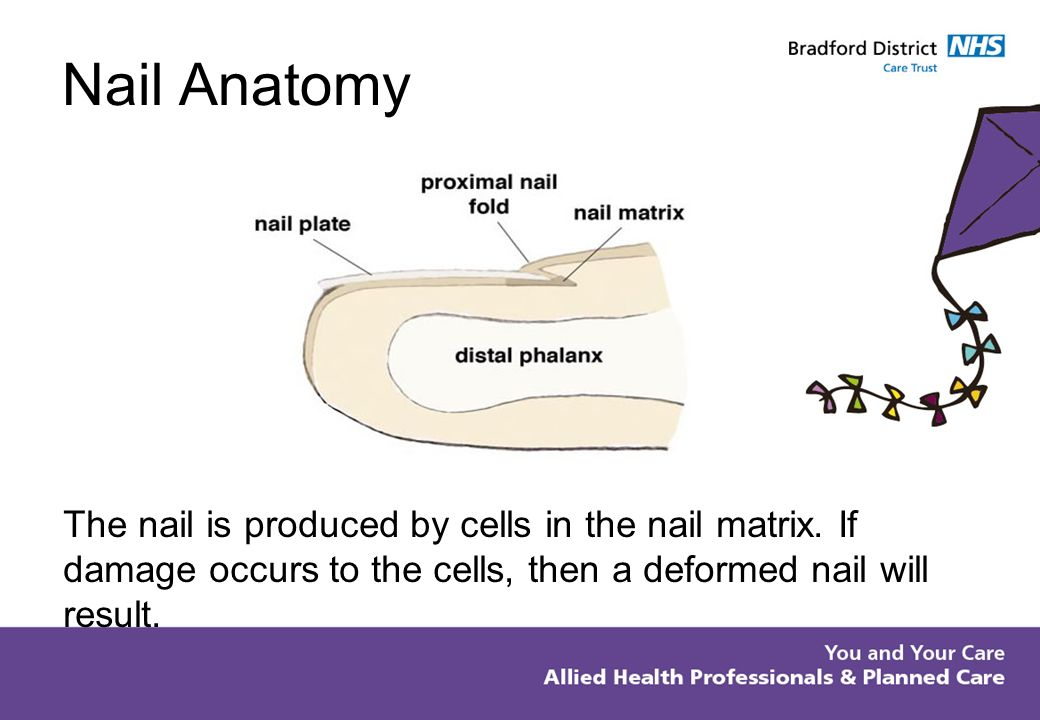 Germinal Matrix Anatomy Image collections - human body anatomy