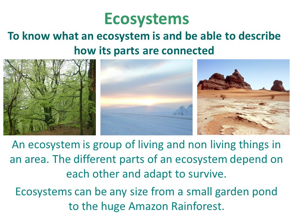 the survival of the rainforests depends on human compassion The april 2018 compassion games 9-day global  for mother earth while acknowledging our human place in the web of life  compassion games international creative .