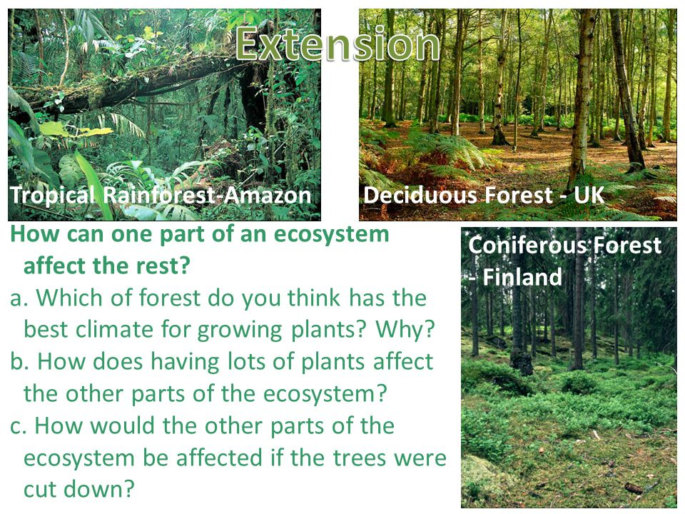 Ecosystems to know what an ecosystem is and be able to for 4 parts of soil