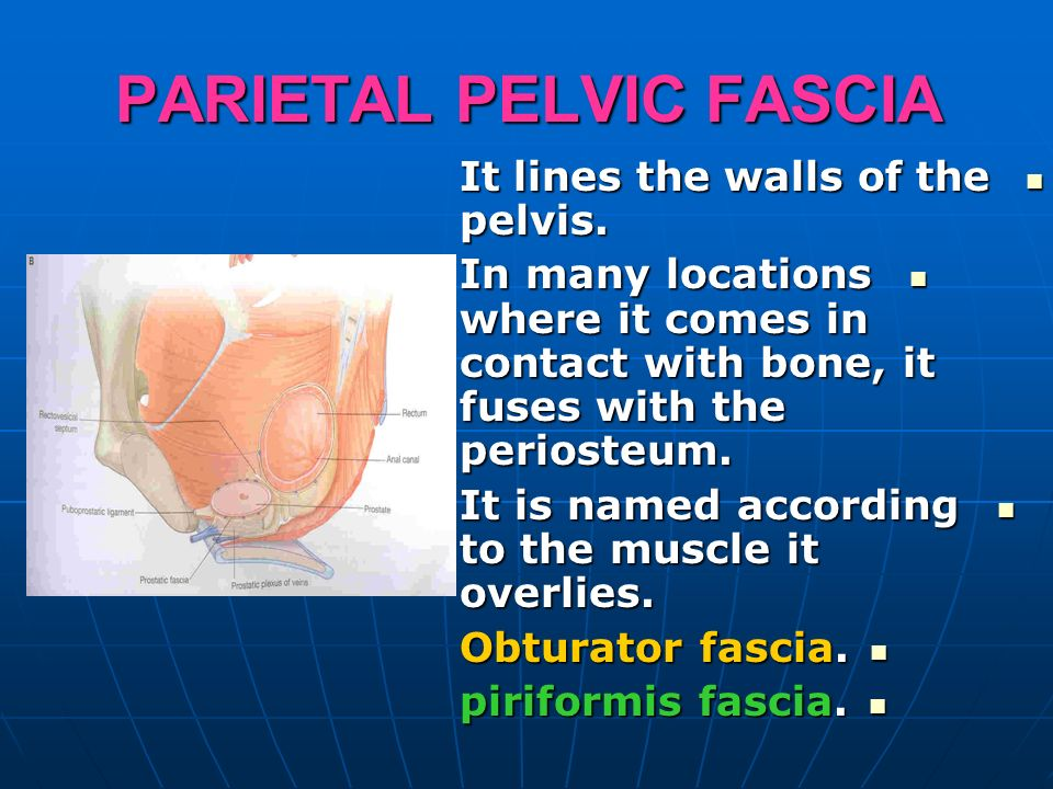 Nerve Supply To Pelvic Floor Bilateral Sacralization Of L5