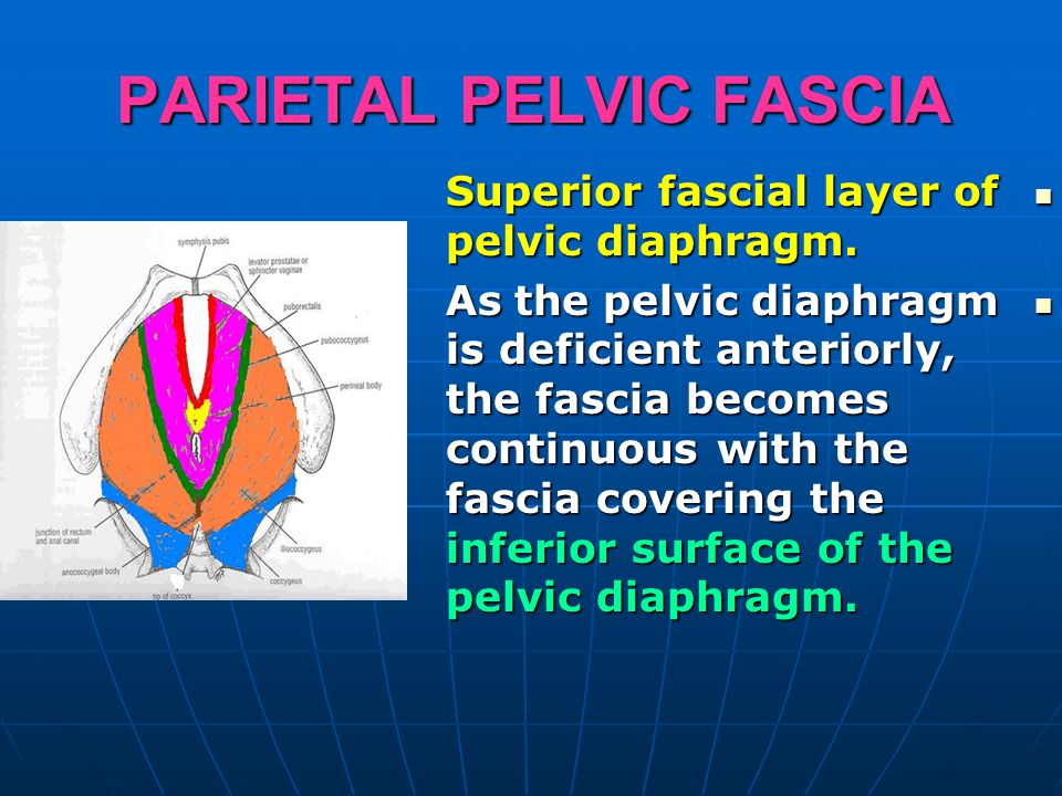 Pelvis It Is The Part Of The Body Surrounded By The Pelvic