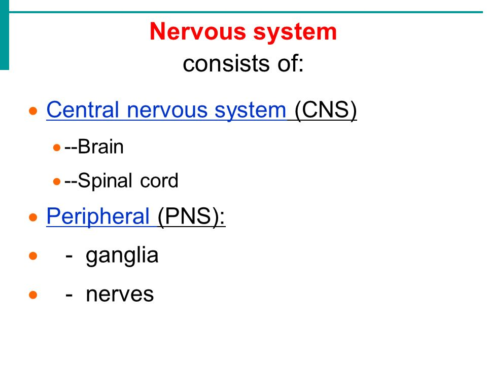 the central nervous system consists Best answer: the peripheral nervous system (pns) resides or extends outside the central nervous system (cns), which consists of the brain and spinal cord.