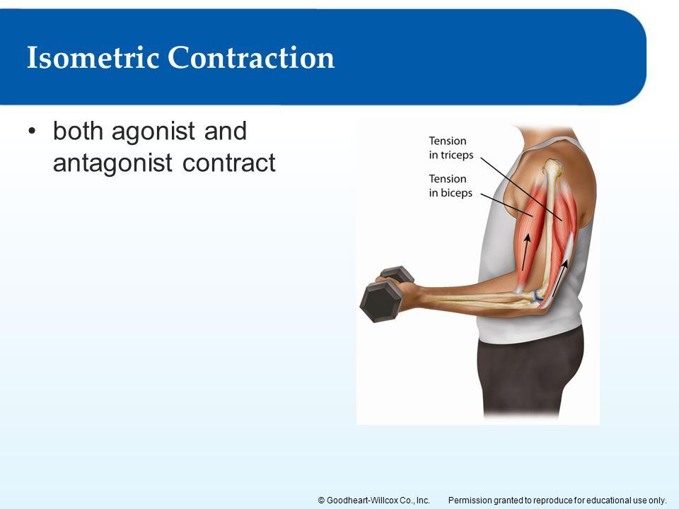 Isometric Contraction