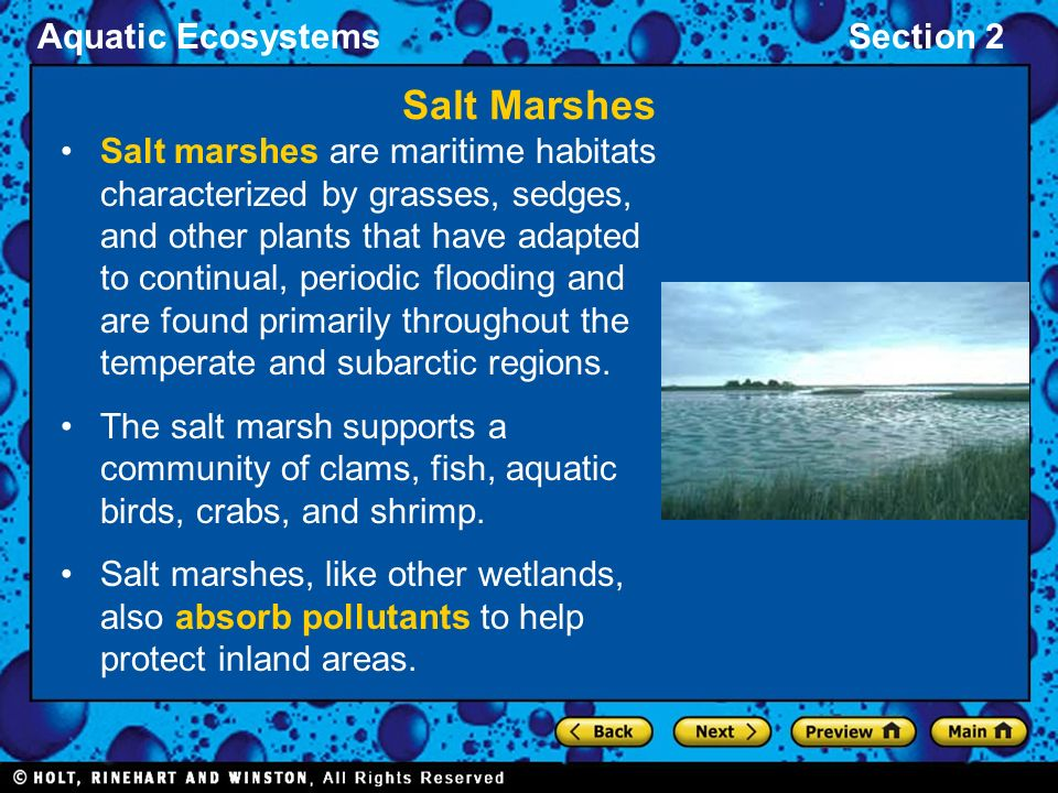 salt marsh ecosystem essay Salt marsh according to noaa marine ecosystem — (2008) smithsonian institution: ocean portal marine ecosystems research programme (uk.