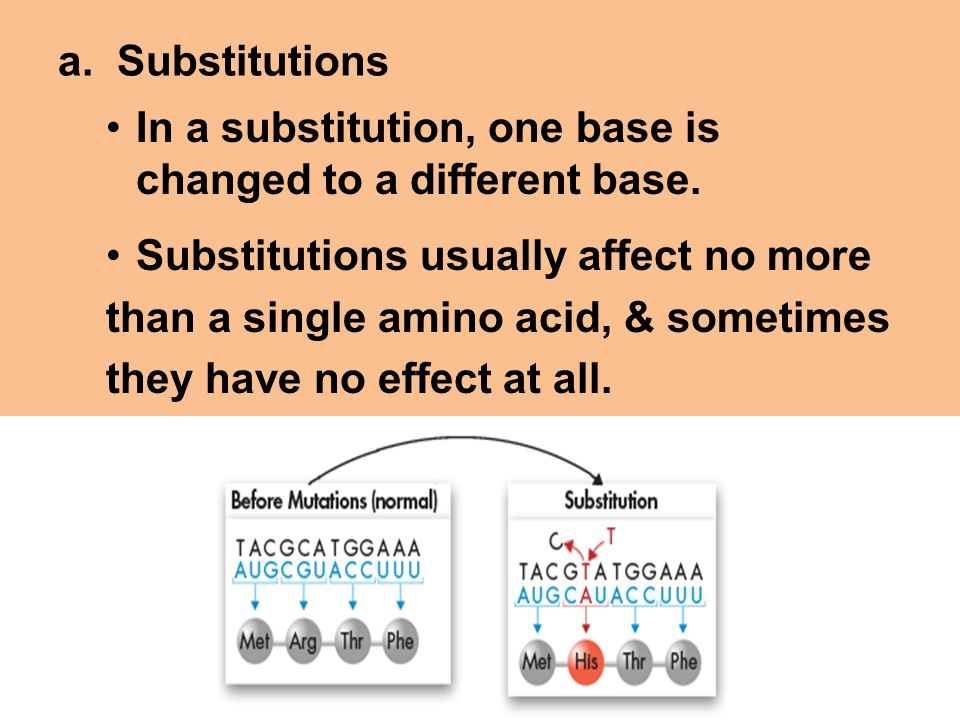 a. Substitutions In a substitution, one base is changed to a different base. Substitutions usually affect no more.