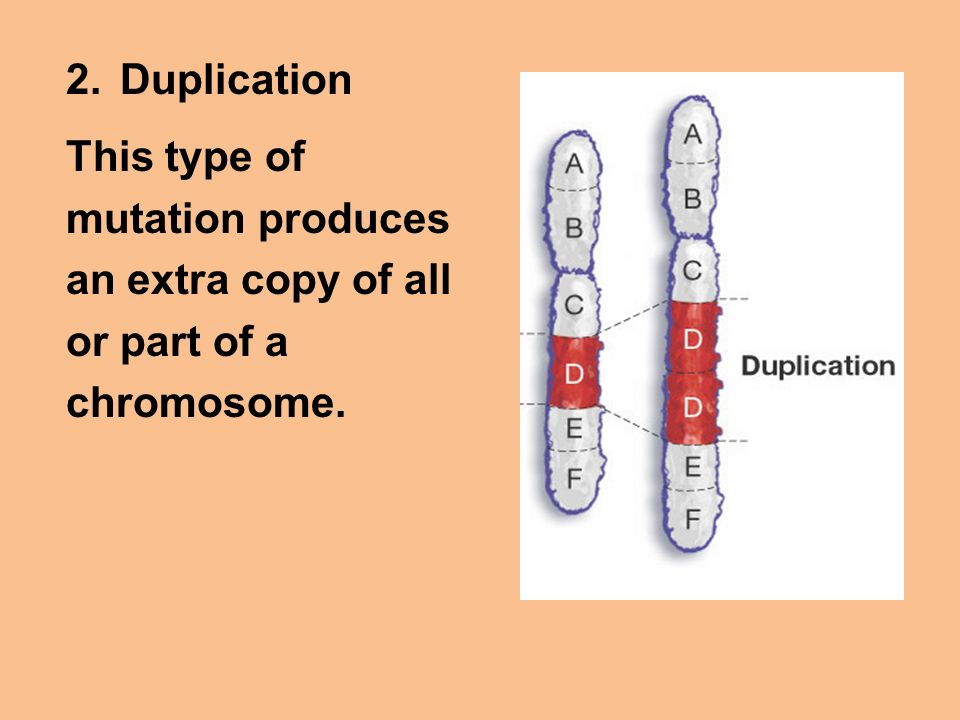 Duplication This type of mutation produces an extra copy of all or part of a chromosome.