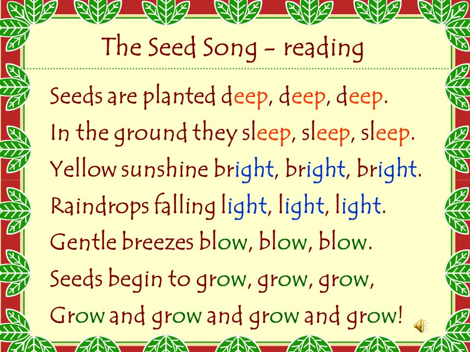 The Seed Song Reading Seeds Are Planted Deep Deep Deep Ppt