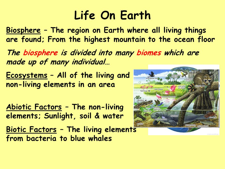 Chapter 4 organization of life ecosystems ppt video for Things found in soil