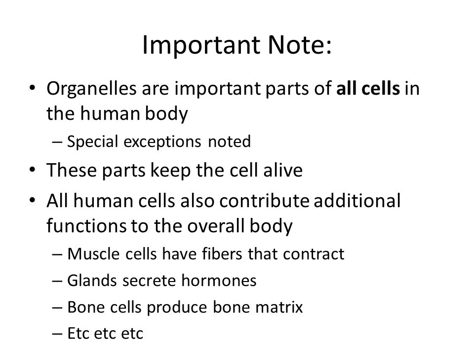 cells part 2: cell structures - ppt download, Muscles