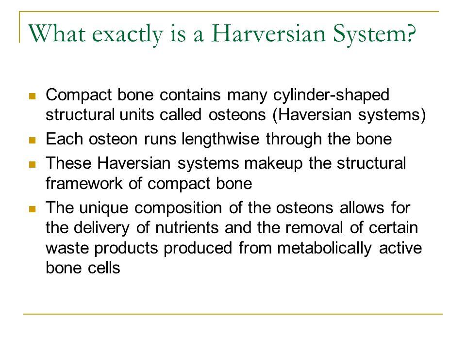 Haversian System - ppt video online download