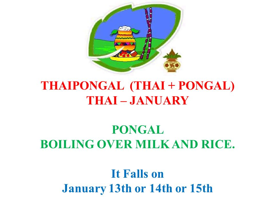 THAIPONGAL (THAI + PONGAL) BOILING OVER MILK AND RICE.