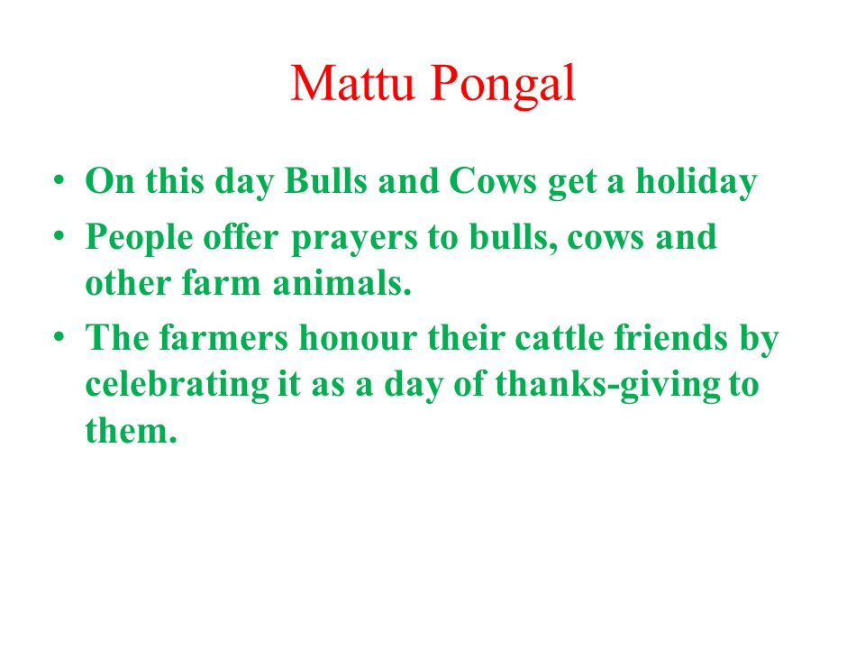 Mattu Pongal On this day Bulls and Cows get a holiday