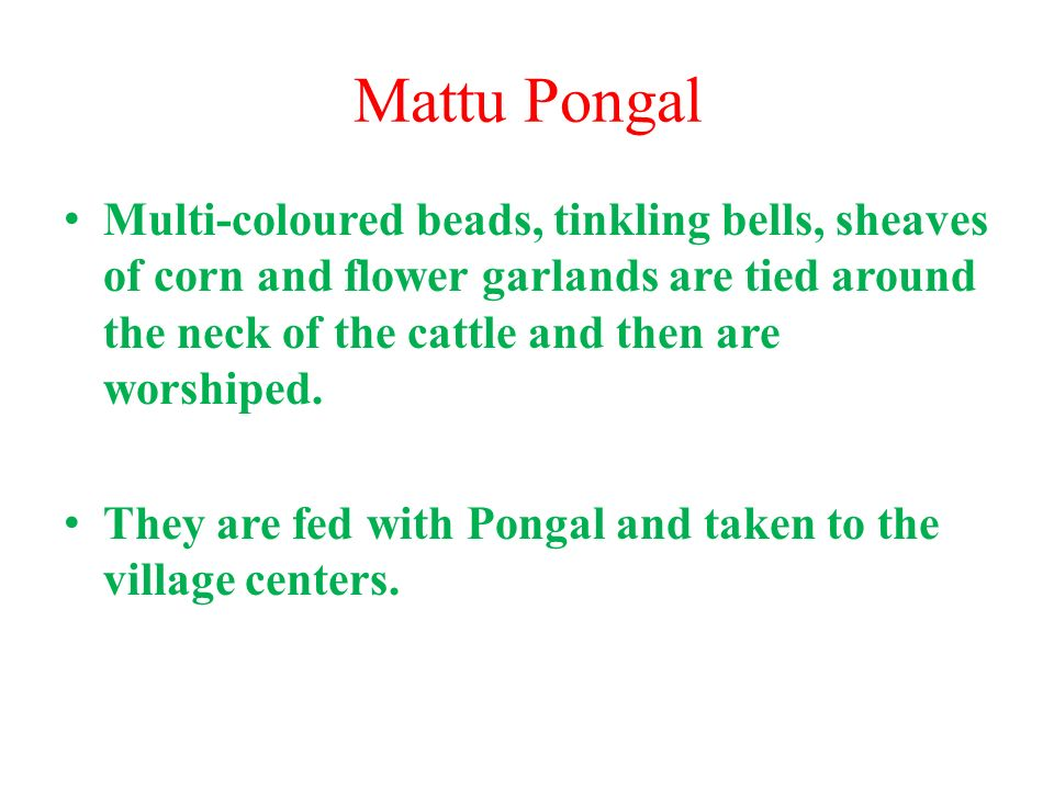 Mattu Pongal Multi-coloured beads, tinkling bells, sheaves of corn and flower garlands are tied around the neck of the cattle and then are worshiped.