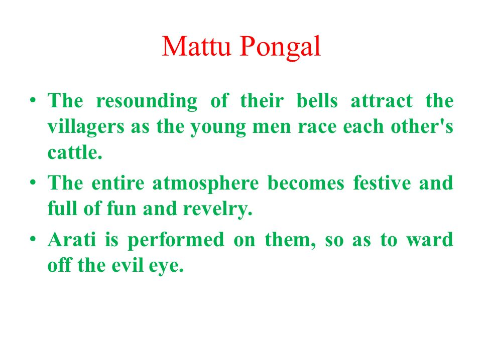 Mattu Pongal The resounding of their bells attract the villagers as the young men race each other s cattle.