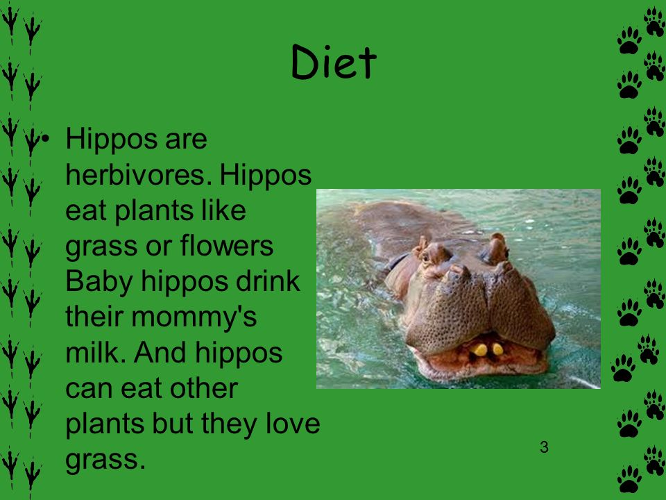 What Does Hippo Eat Food