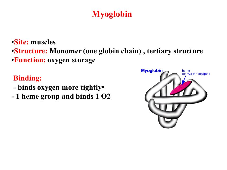 myoglobin structure and function pdf