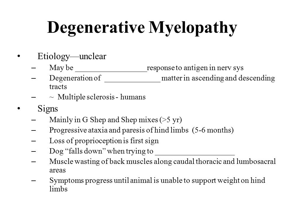 Image result for Degenerative Myelopathy