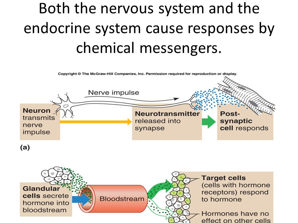 Both the nervous system and the endocrine system cause responses by chemical messengers.