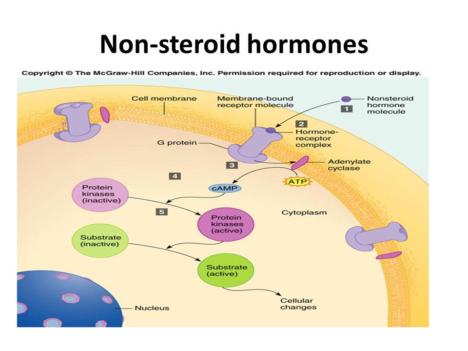 Non-steroid hormones