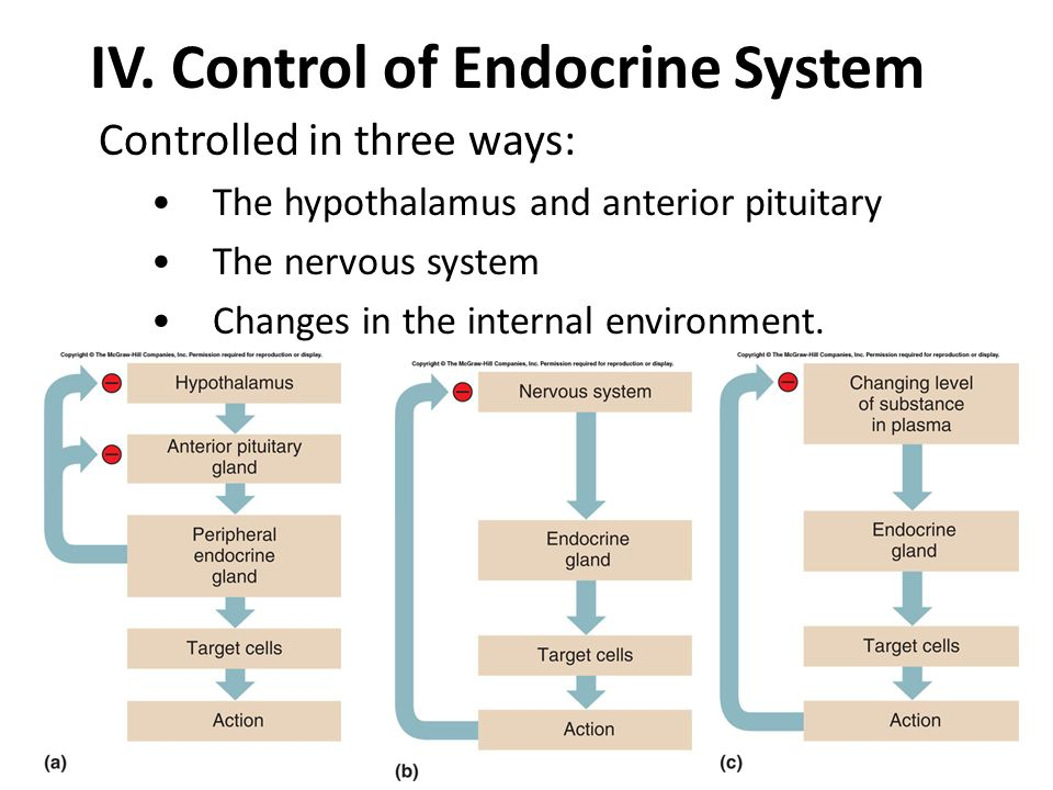 IV. Control of Endocrine System